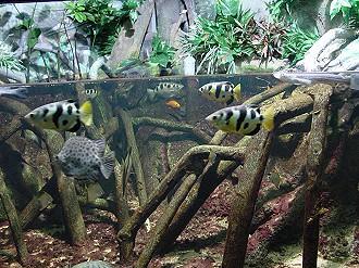 décor aquarium mangrove